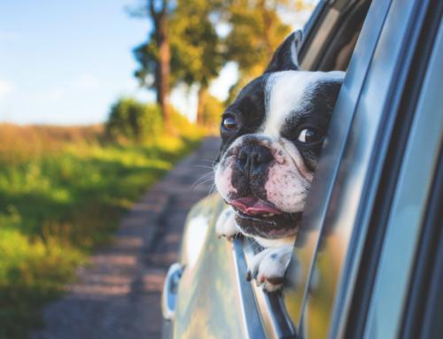 Consejos para viajar con tu mascota en coche